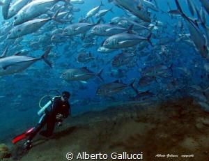 Jackfish by Alberto Gallucci