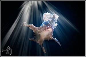 Dancing in the light by Dray Van Beeck