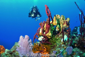 Generic wide angle with diver. by Arun Madisetti