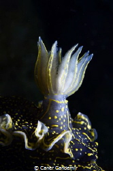 Nudibranch from Sigacik by Caner Candemir