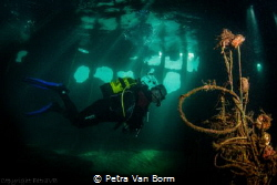 Diver inside the Temple Hall wreck by Petra Van Borm