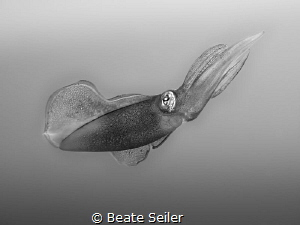 Squit B/W by Beate Seiler