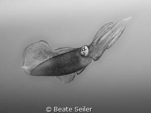 Squit B/W by Beate Seiler