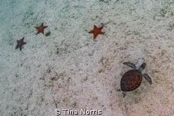 Starfish/Turtle by Tina Norris