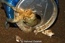 Little Octopus by Mehmet Öztabak