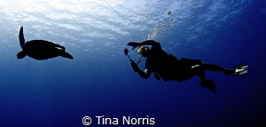 Turtle and Diver Silhouette by Tina Norris