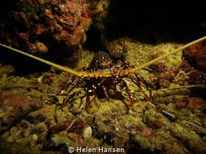 Lobster by Helen Hansen