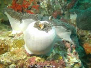 Nemo house by Helen Hansen