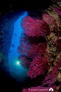 Red Seafans @ Banco S.Croce Cave by Marco Gargiulo