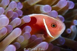 Annenomen &  Nemo by Khaled Zaki