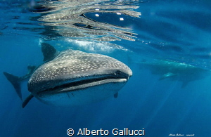 Two is better than one by Alberto Gallucci