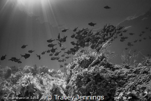 Lassisters Reef by Tracey Jennings