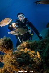 Diver looking for seahorses by Petra Van Borm
