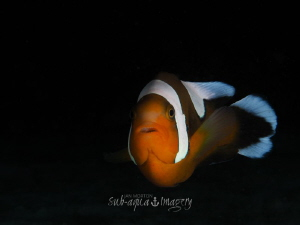 Anemone Fish above the house by Jan Morton