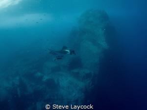 Manta cruising in Socorro by Steve Laycock