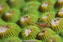 While on a night dive I was attracted by the color on thi... by Pepe Suárez