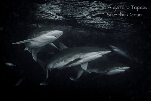 Sharks in Black, Darwin Island Galápagos by Alejandro Topete