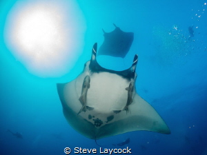 Manta - chasing the sun - in Socorro isalnds by Steve Laycock