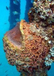 Sponge and wild life. by Yamil Merced