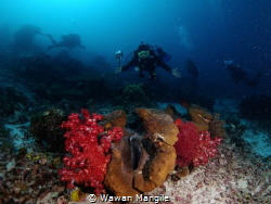 Giant Clams by Wawan Mangile