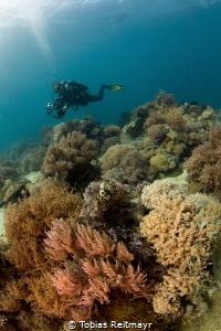 Soft corals, Puerto Galera by Tobias Reitmayr
