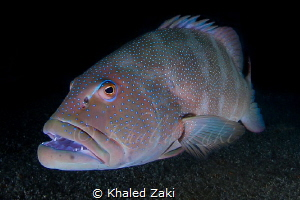 Fisheye to Fisheye by Khaled Zaki