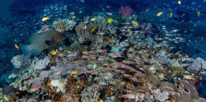 Reef Busy-ness by Chris Pienaar