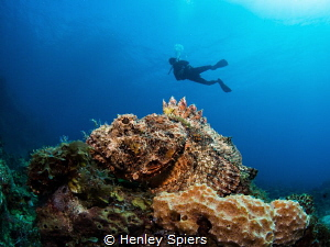 Diver and Scorpionfish by Henley Spiers