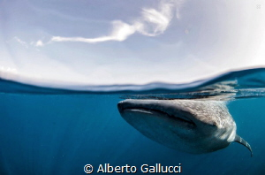 Beneath the surface by Alberto Gallucci