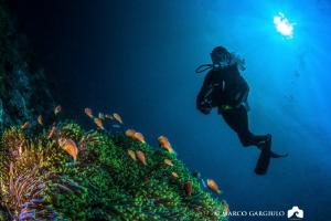 Clownfish family & Lory by Marco Gargiulo