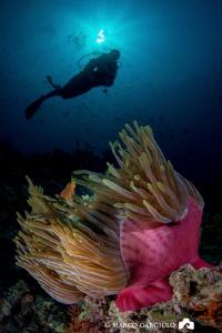 Anemonefish & Lory by Marco Gargiulo