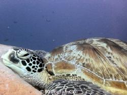 I don't want to move,I don't care anything,I'm a lazy turtle by Xiaoqian Cui