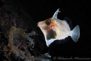 I don't know this fish by Aleksandr Marinicev