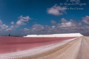 Pink Salt Lake, Bonaire Netherlans Antilles by Alejandro Topete