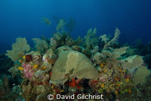 A beautiful reef scenic, Roatan, Honduras. by David Gilchrist