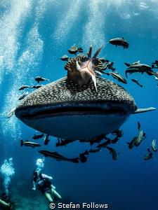 Whale Rider ... ! by Stefan Follows