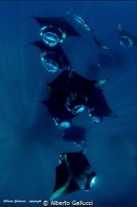 Mantas in Hanifaru Lagoon, Maldives by Alberto Gallucci