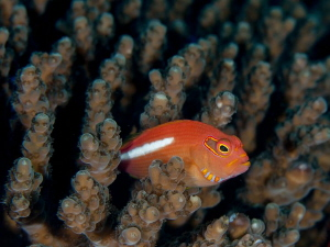 I love the way that light changes the scene underwater fr... by Chris Pienaar