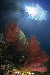 The Passage - Coral Gardens by Hakan Basar