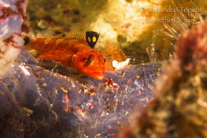 Litle red Fish, Cape Marshall Galápagos by Alejandro Topete