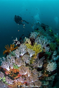 Softcorals on small wreck and diver, Manila Channel, Puer... by Tobias Reitmayr