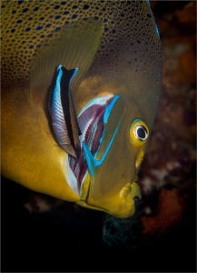 I was recovering from a shooting a whip coral goby in a s... by Chris Pienaar