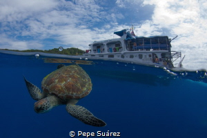 Turtle on surface interval @The Similan Islands by Pepe Suárez