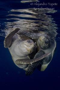 Turtle in the Sea, Puerto Vallarta México by Alejandro Topete