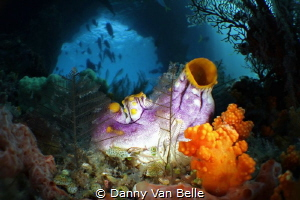 Jamur Boo is one of the most famous divesites in Rajah Am... by Danny Van Belle