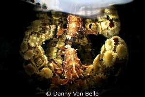 It was one of the most demanding efforts to shoot this sh... by Danny Van Belle