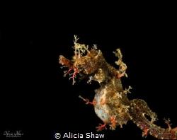Sydney Pigmy Pipehorse by Alicia Shaw