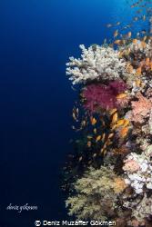 Colourful corals by Deniz Muzaffer Gökmen