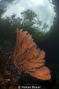 The passage - coral garden by Hakan Basar