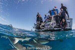 Wacky shark splits — Subal underwater housing, Canon 1Dx... by Terry Steeley